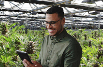 Digital Marketing Strategies for Cannabis Business Owners