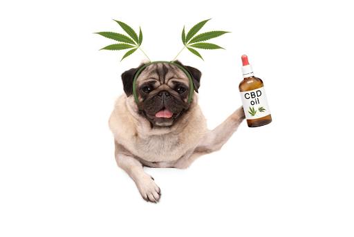 What Are The Different Types Of CBD Products Designed For Pets